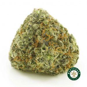 Buy Cannabis Blueberrry Cheesecake at Wccannabis Online Shop