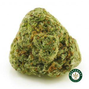 Buy Cannabis Animal Cookies at Wccannabis Online Shop