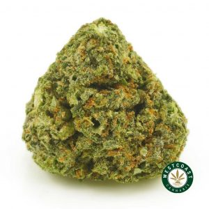 Buy Cannabis Alien Headbad at Wccannabis Online Shop