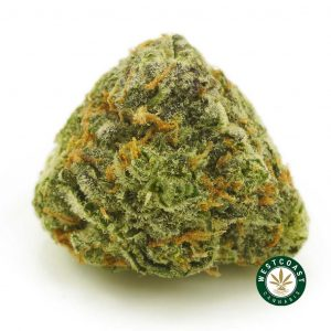 Buy Cannabis Purple Gelato at Wccannabis Online Shop