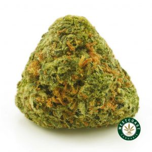 Buy Cannabis Lemon Sour Diesel at Wccannabis Online Shop