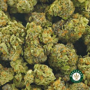 Buy Cannabis Grape Bomb at Wccannabis Online Shop