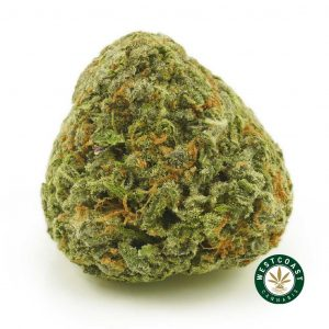 Buy Cannabis Astroboy at Wccannabis Online Shop
