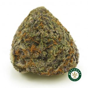Buy Cannabis Purple Tropicana at Wccannabis Online Shop