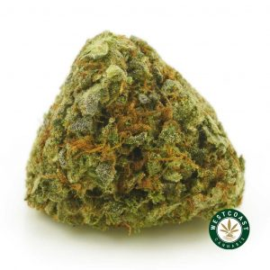 Buy Cannabis Rockstar Kush at Wccannabis Online Shop