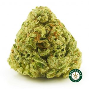 Buy Cannabis Violator at Wccannabis Online Shop