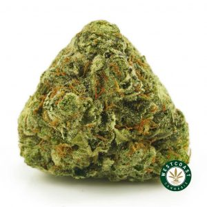 Buy Cannabis Pacific Blue at Wccannabis Online Shop