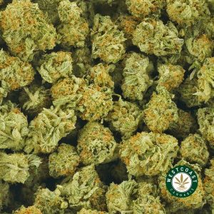 Buy Cannabis Moby Dick at Wccannabis Online Shop