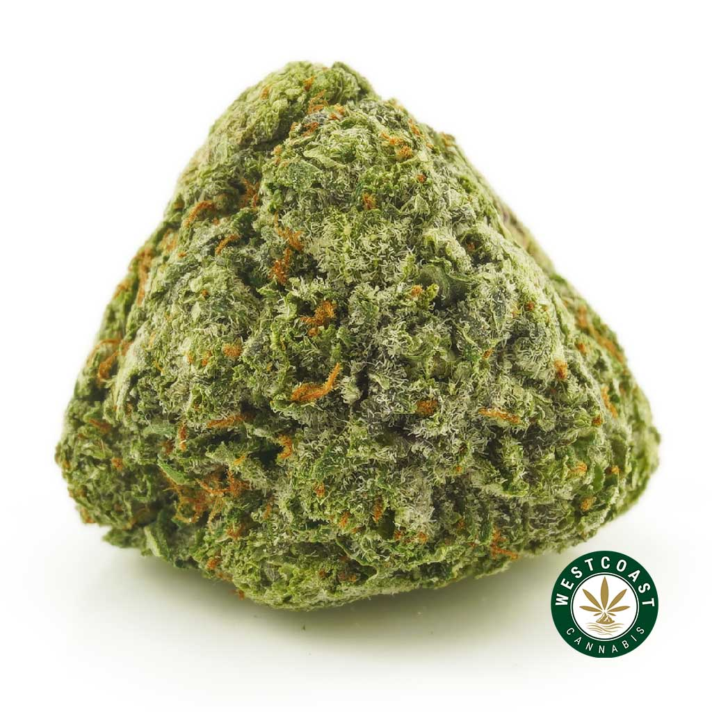 Buy Cannabis Kosher Kush Popcorn at Wccannabis Online Shop