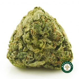Buy Cannabis Rockstar at Wccannabis Online Shop