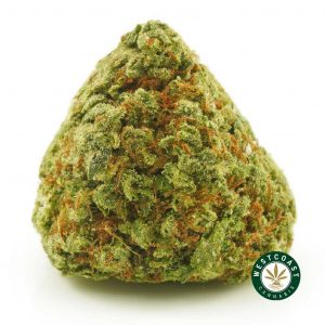 Buy Cannabis Purple Afghani at Wccannabis Online Shop