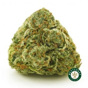 Buy Cannabis Blue Dream at Wccannbis Online Shop