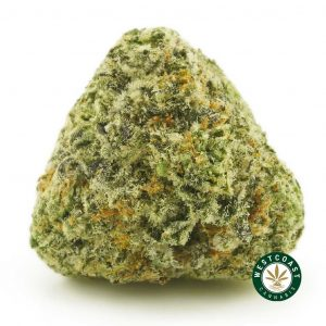 Buy Cannabis Tornado at Wccannabis Online Shop