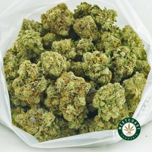 Buy Cannabis Pink Champagne at Wccannabis Online Shop