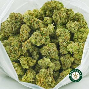 Buy Cannabis Blueberry Pie at Wccannabis Online Shop