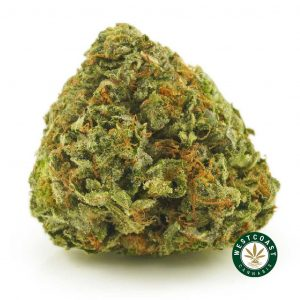 Buy Cannabis King Kush at Wccannabis Online Shop