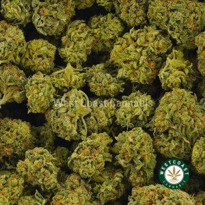 Buy Cannabis Rockstar at Wccannabis Online Shop