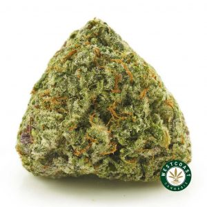 Buy Cannabis Sensi Star at Wccannabis Online Shop