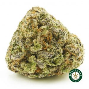 Buy Cannabis Black Widow at Wccannabis Online Shop