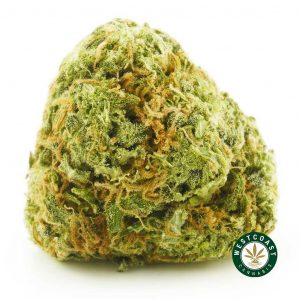 Buy Cannabis Wedding Pie at Wccannabis Online Shop