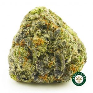 Buy Cannabis Pink Alien Cookies at Wccannabis Online Shop