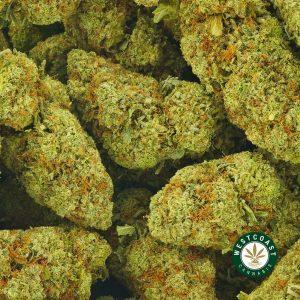 Buy Cannabis Pina Colada at Wccannabis Online Shop