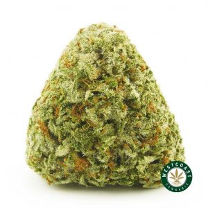 Buy Cannabis Blueberry Dream at Wccannabis Online Shop