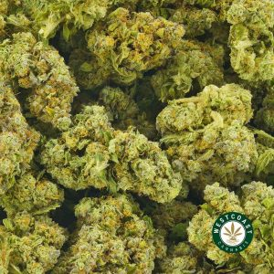 Buy Cannabis Platinum Alien Cookies at Wccannabis Online Shop