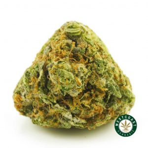 Buy Cannabis Pink Astroboy at Wccannabis Online Shop