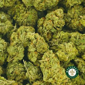 Buy Cannabis Astro Pink at Wccannabis Online Shop