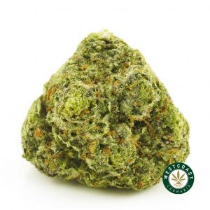 Buy Cannabis Vintage Blueberry at Wccannabis Online Shop