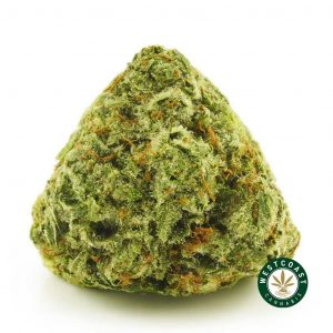 Buy Cannabis Death Punch at Wccannabis Online Shop