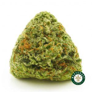 Buy Cannabis Alien Cookies at Wccannabis Online Shop