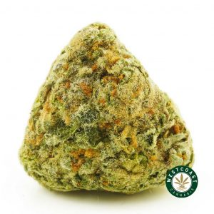 Buy Cannabis Dolato at Wccannabis Online Shop