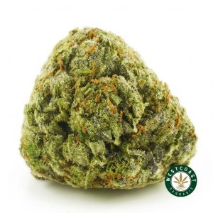 Buy Cannabis Blue Unicorn at Wccannabis Online Shop