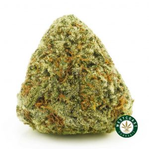 Buy Cannabis Black Mango at Wccannabis Online Shop