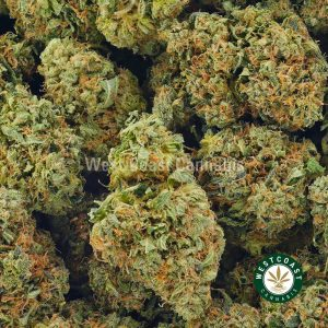 Buy Cannabis Black Tuna Kush at Wccannabis Online Shop
