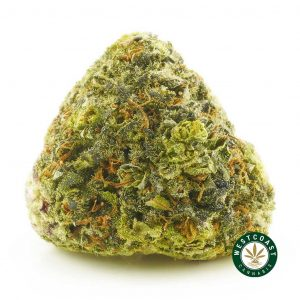 Buy Cannabis Purple Monkey at Wccannabis Online Shop