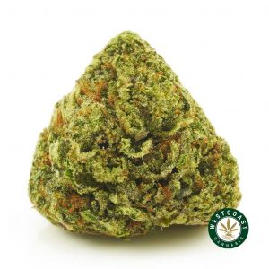 Buy Cannabis Pink Ghost Train Haze at Wccannabis Online Shop
