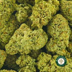 Buy Cannabis Platinum Pink at Wccannabis Online Shop