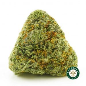 Buy Cannabis Alaskan Thunder Fuck at Wccannabis Online Shop
