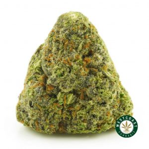Buy Cannabis Pineapple Berry at Wccannabis Online Shop