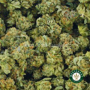 Buy Cannabis Master Kush Popcorn at Wccannabis Online Shop