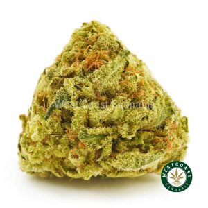 Buy Cannabis Blueberry Mimosa at Wccannabis Online Shop