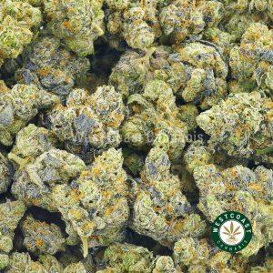 Buy Cannabis Peanut Butter Breath at Wccannabis Online Shop