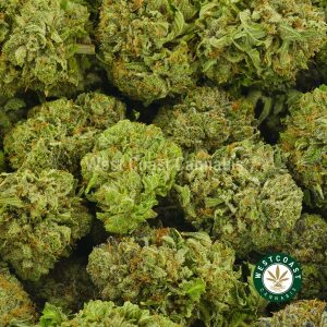 Buy Cannabis Sour Diesel at Wccannabis Online Shop