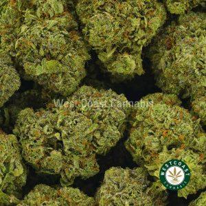 Buy Cannabis UBC Chemo at Wccannabis Online Shop