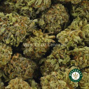 Buy Cannabis Dutch Treat at Wccannabis Online Shop
