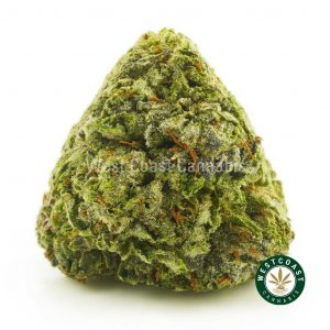 Buy Cannabis Ortega at Wccannabis Online Shop