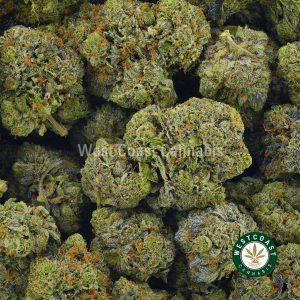 Buy Cannabis Pink Kush at Wccannabis Online Shop